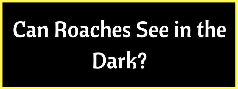 Do Cockroaches See in the Dark