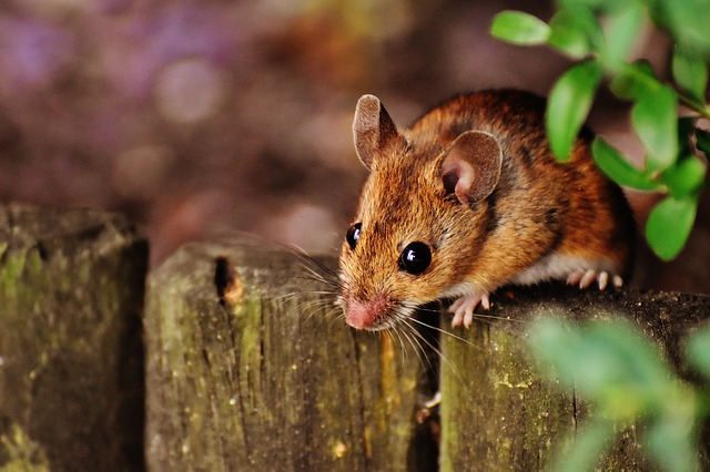 can mice eat cockroaches in your house