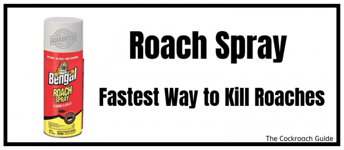 Kills roaches instantly