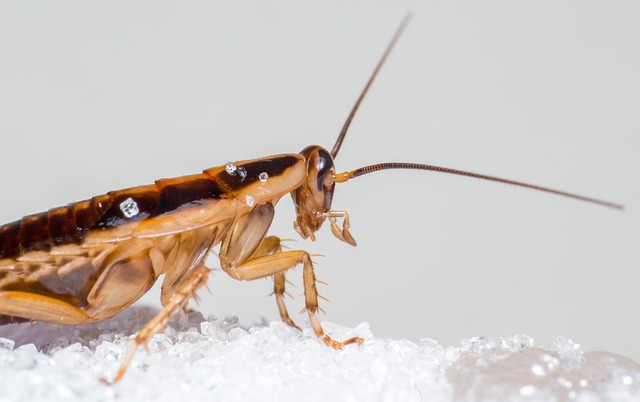 roaches in dishwasher