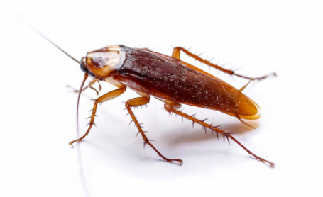 Found one cockroach in house
