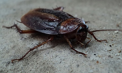 how to get roaches out of refrigerator