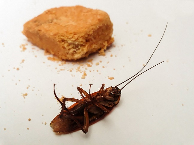 eliminate roaches instantly.