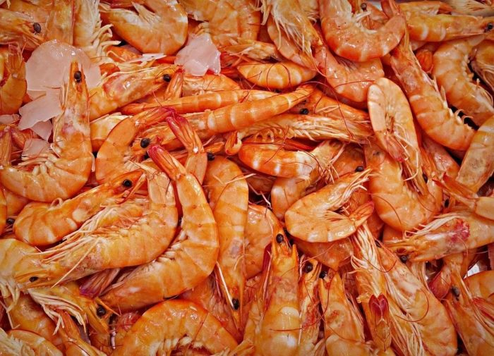 shrimps and cockroaches